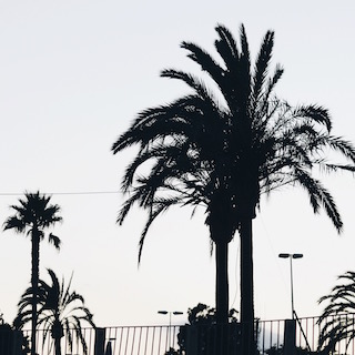 Mallorca Days